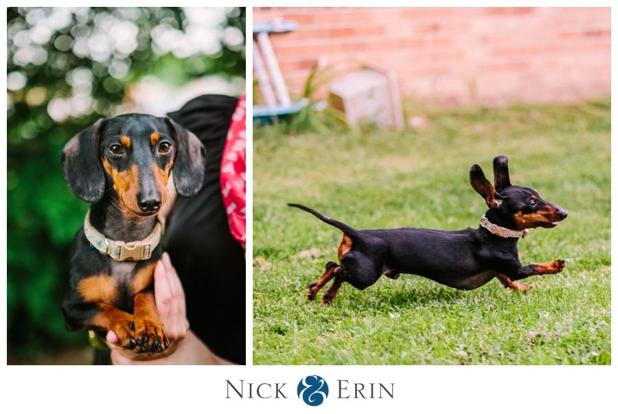 Donner_Photography_Mini Dachsund_Richard_the_Dog_0010