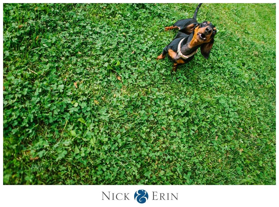 Donner_Photography_Mini Dachsund_Richard_the_Dog_0011